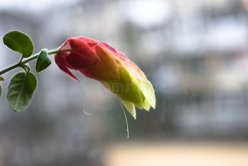 Ongelooflijk mooie bloem met vage achtergrond stock afbeelding