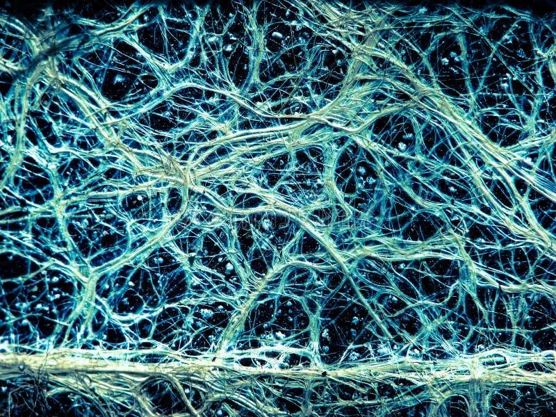 Ongelooflijke vasculaire installatie fijne wortels die als een neuraal netwerk kijken stock afbeeldingen