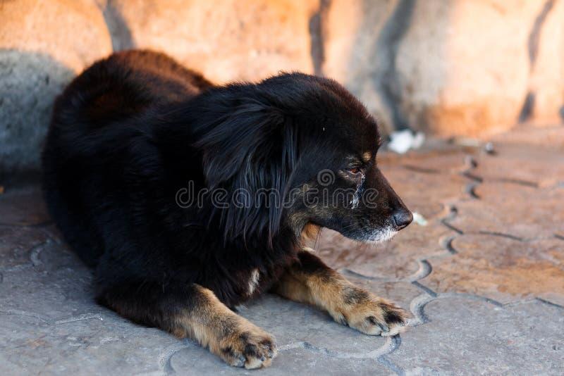 Ongelukkige dakloze hond die op het asfalt liggen Een hond van donkere kleur ligt op de grond Een dakloze hond met een droevige u royalty-vrije stock afbeeldingen