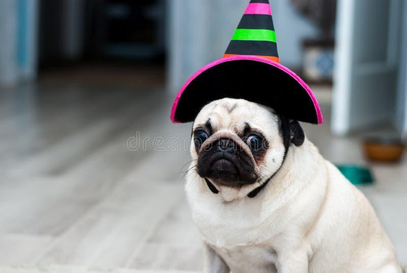 Ongelukkige pug Droevige verjaardag Hond in een hoed Halloween-hond De partij van Halloween Het kostuum van Carnaval, Venetië stock afbeeldingen