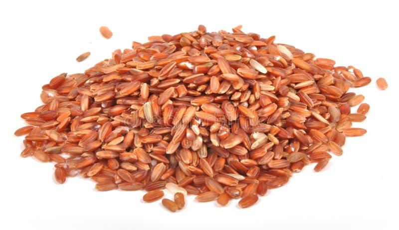Ongepelde rijstkorrels stock afbeeldingen