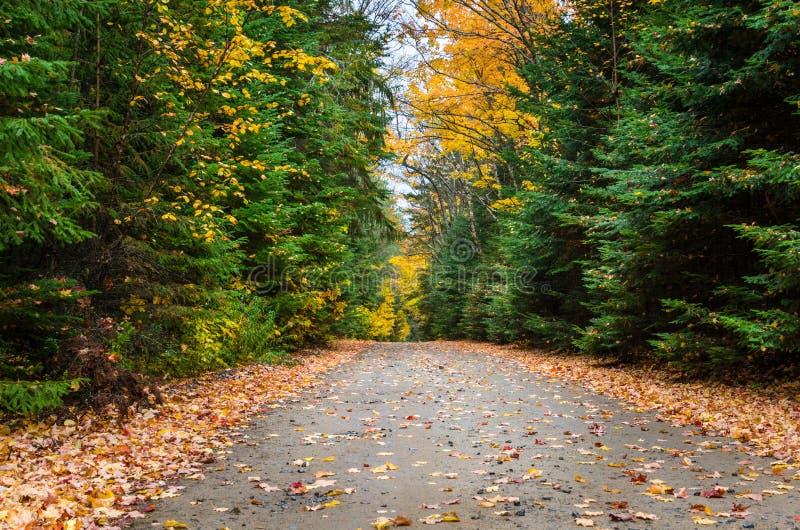 Ongeplaveid Forest Road Dotted met Gevallen Bladeren in de Herfst royalty-vrije stock foto's