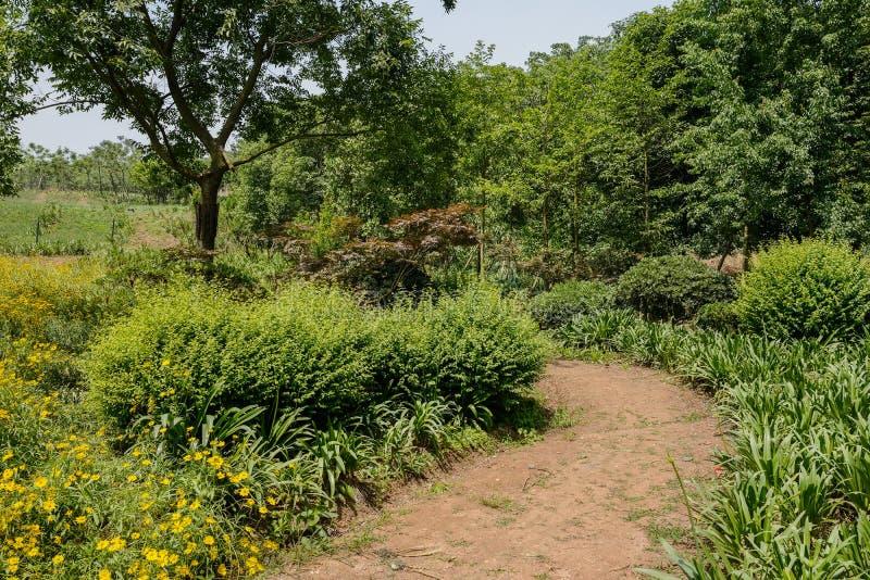 Ongeplaveid landelijk voetpad in verdant groene zomer royalty-vrije stock afbeelding