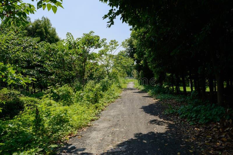 Ongeplaveid voetpad in onkruid en bomen van zonnige de zomermiddag royalty-vrije stock foto