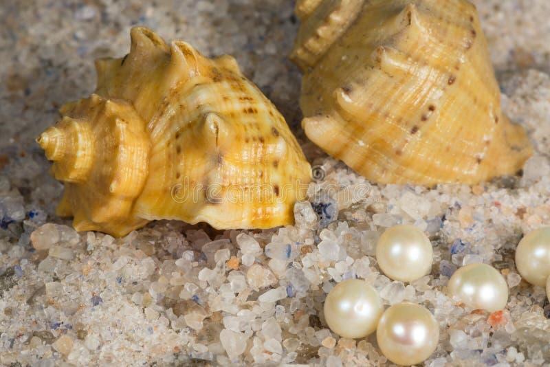 Ongeraffineerd natuurlijk overzeese zout, parel en shell stock afbeelding