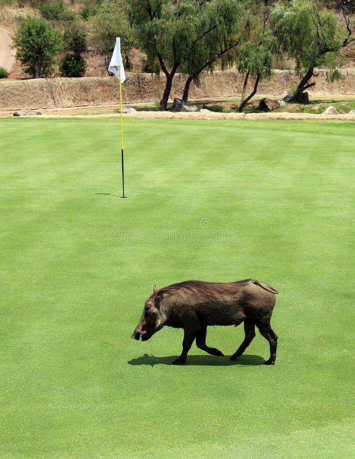 Ongewenste deelnemer in Gary Player Charity Invitational Golf T royalty-vrije stock fotografie