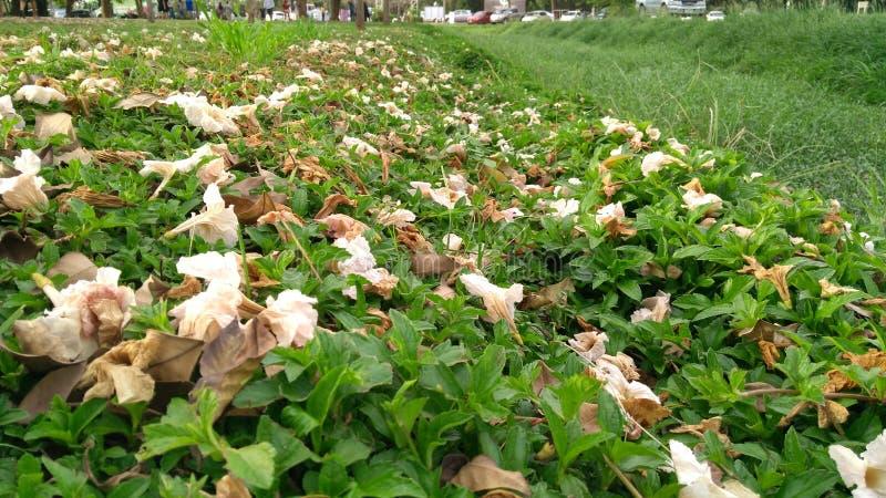 Ongewenste flora stock afbeeldingen