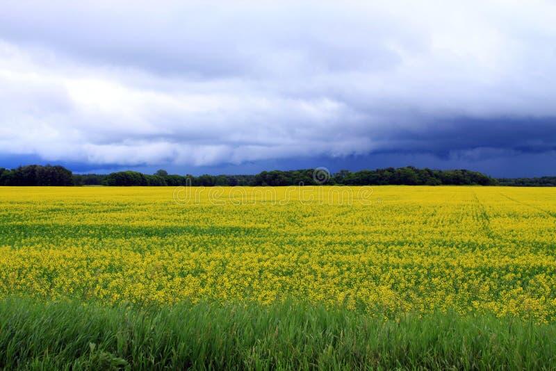 Onheilspellende wolken over Gebied van Manitoba Canola in bloesem royalty-vrije stock foto's