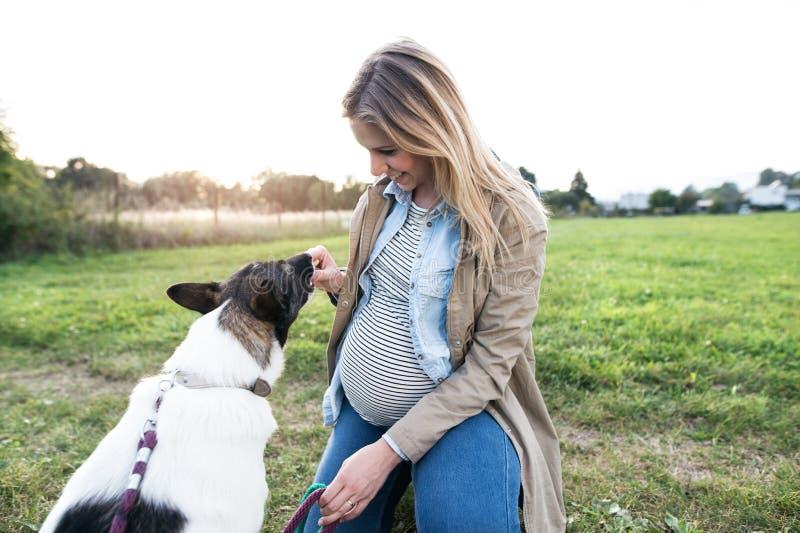 Onherkenbare zwangere vrouw met hond in groene zonnige aard royalty-vrije stock foto's