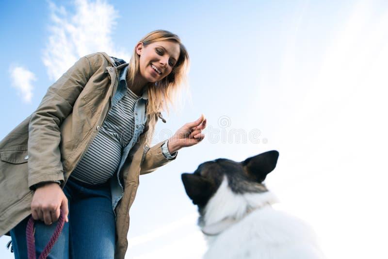 Onherkenbare zwangere vrouw met hond in groene zonnige aard stock fotografie