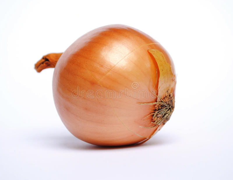 Onion. On the white background royalty free stock photography