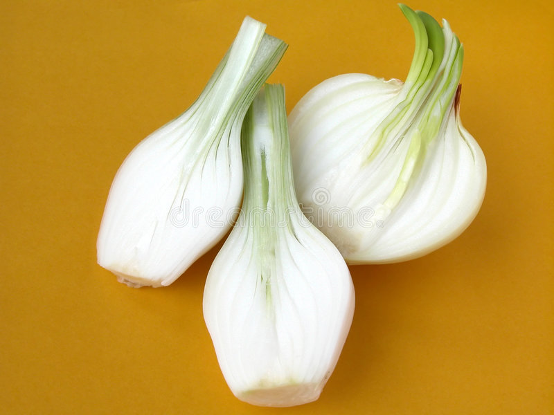Download Onion stock image. Image of vitamin, condiment, grow, stem - 138361