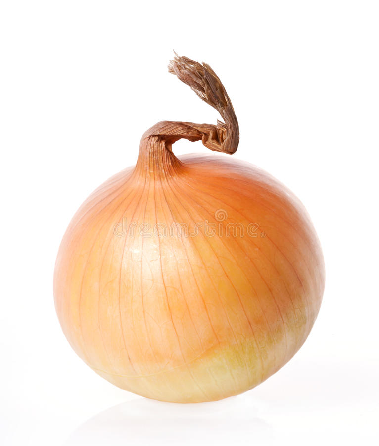 Onion. Isolated on white background