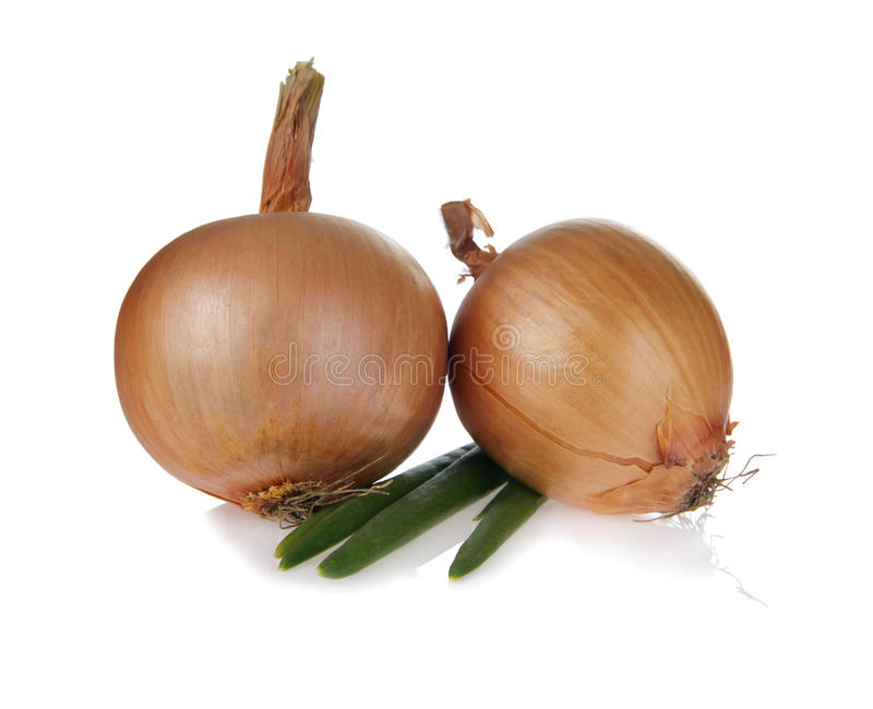 Download Onion stock illustration. Image of gold, good, flavoring - 25394570