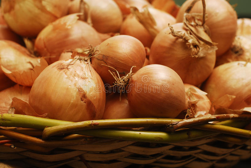 Download Onion stock photo. Image of ingredient, aromatic, catering - 27737780
