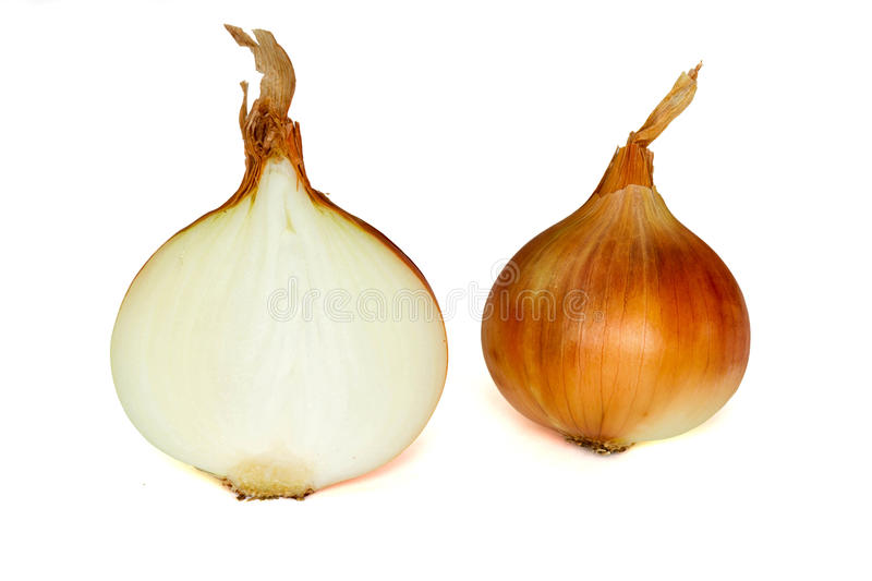 Download Onion stock photo. Image of healthy, food, spice, root - 28363368