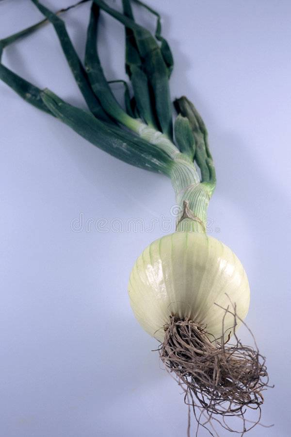 Download Onion stock photo. Image of leaves, food, isolated, taste - 40326