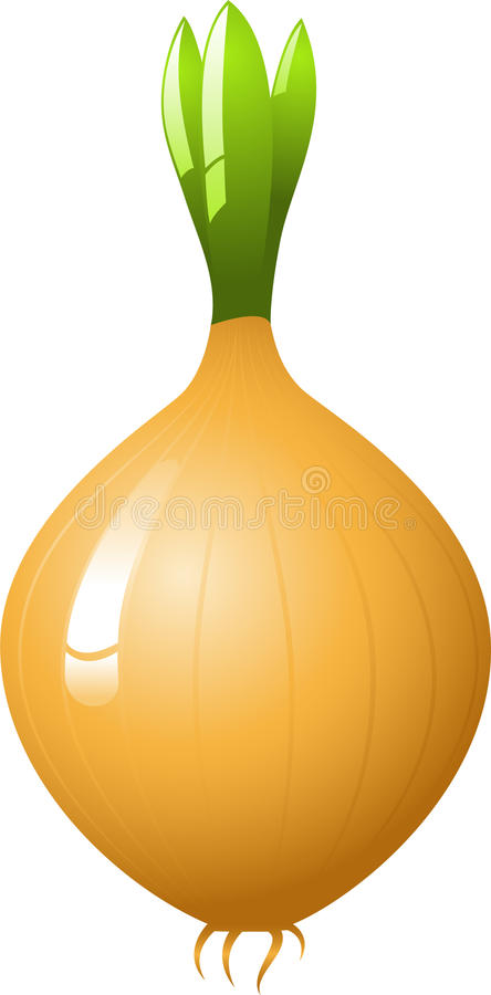Download Onion stock vector. Image of cooking, bulb, leaf, image - 9416315