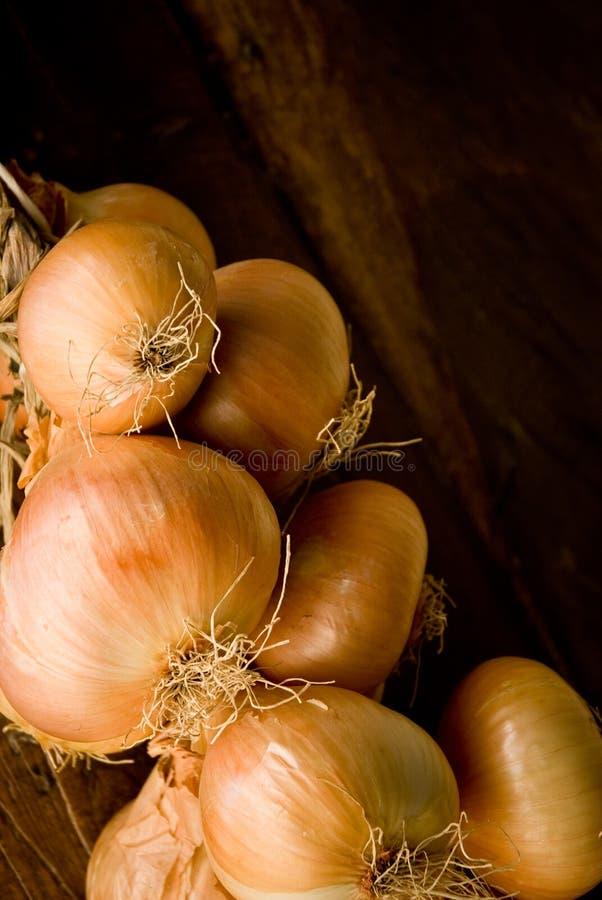 Onion braid royalty free stock photo
