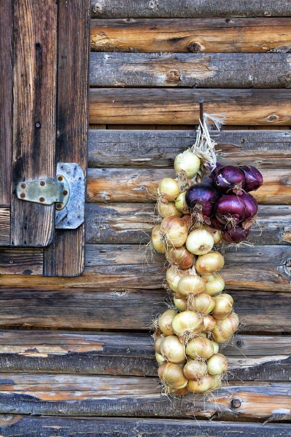 Onion braid stock photos