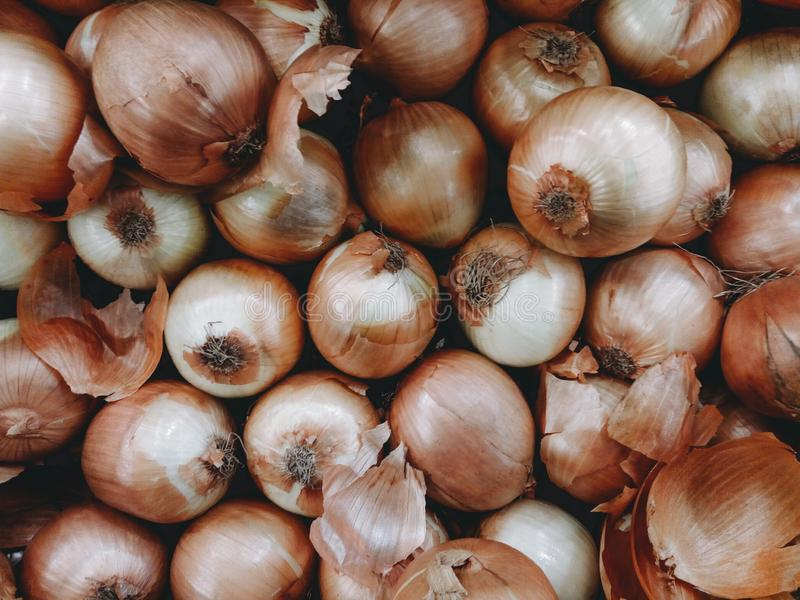 Onion bulb in a group bombay onion called in asia royalty free stock photography