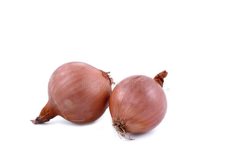 Onion bulbs. Two large onion bulb on white background. Horizontal studio shot royalty free stock images