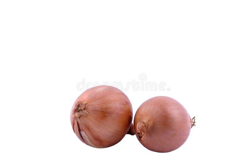 Onion bulbs. Two large onion bulb on white background. Horizontal studio shot royalty free stock photo