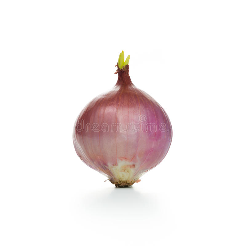 Download Onion stock image. Image of flavouring, fresh, onion - 36354017