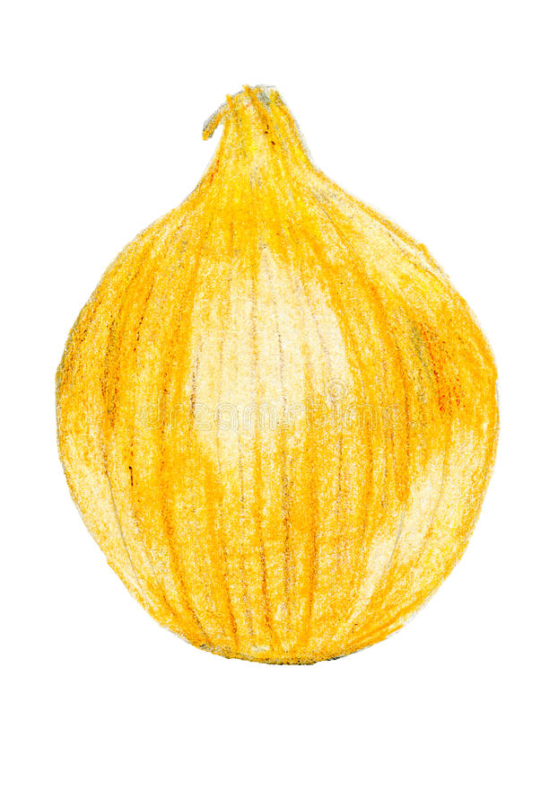 Onion color sketch drawing stock image