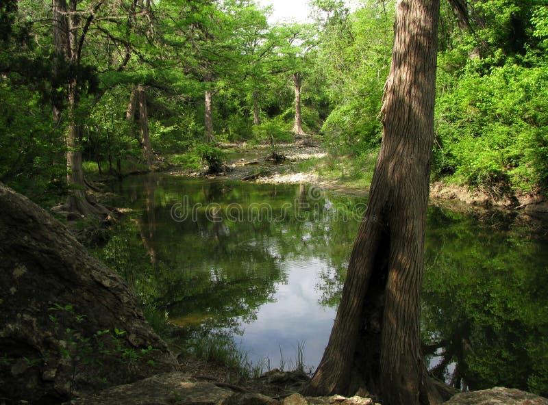 Onion Creek. royalty free stock photography