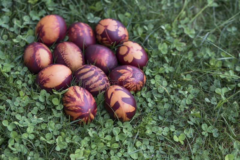 Onion dyed Easter eggs on clover and grass background stock photography