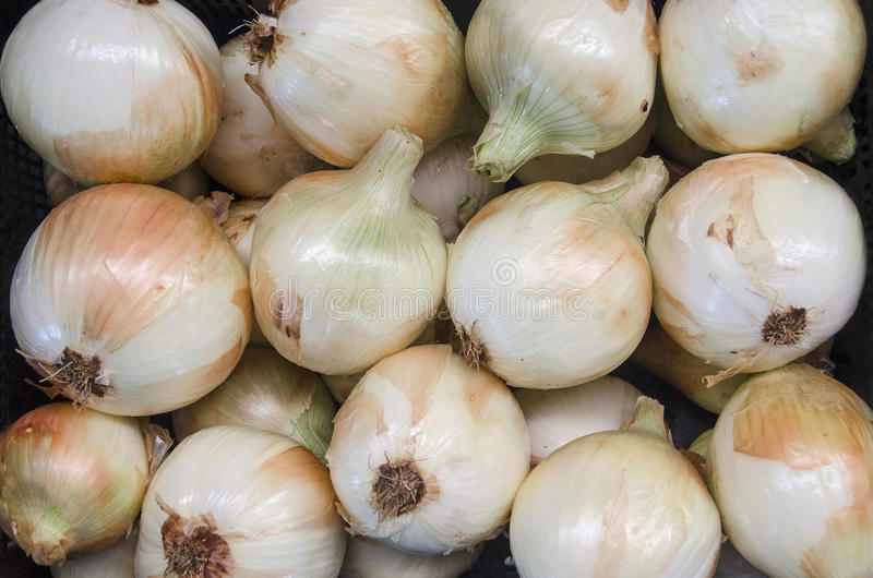 Download Onion Ecological stock image. Image of food, diet, native - 31694819