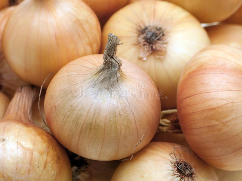 Onion food. Healthy onion vegetable food for freshness eating stock photography