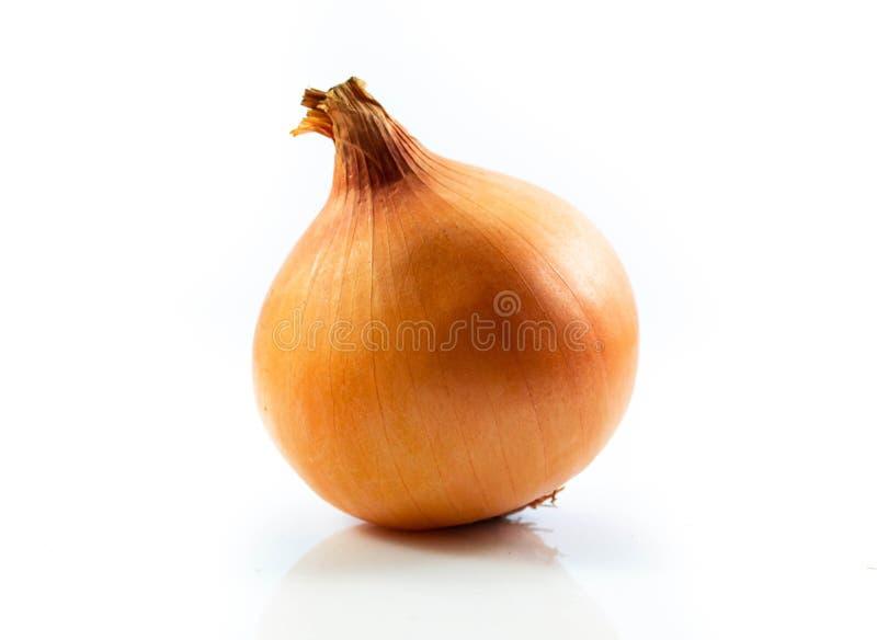 Onion fresh isolated on white background.  stock photos