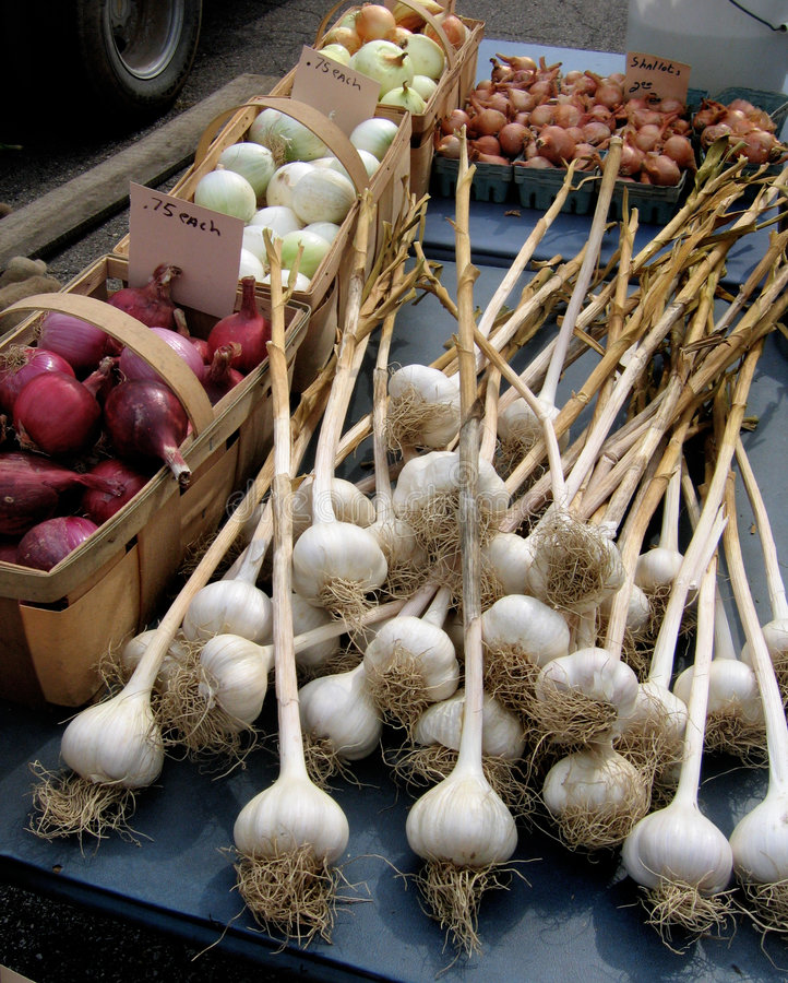 Onion & garlic. Onions and garlic at farmers market royalty free stock photos
