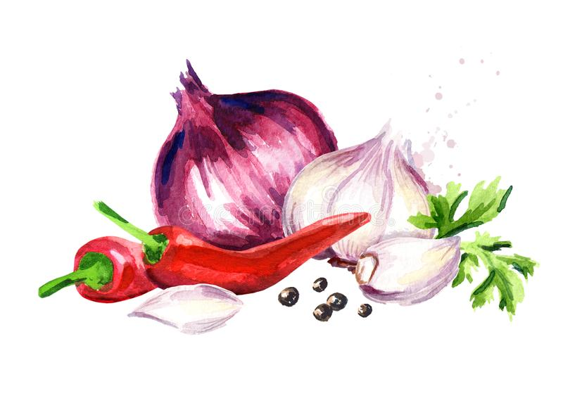Onion, garlic, chili pepper, parsley and peppercorn. Watercolor hand drawn illustration isolated on white background.  stock illustration
