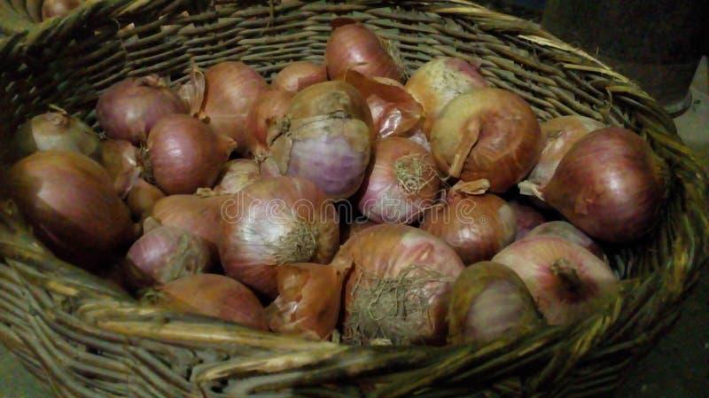 Onion good for health stock photos
