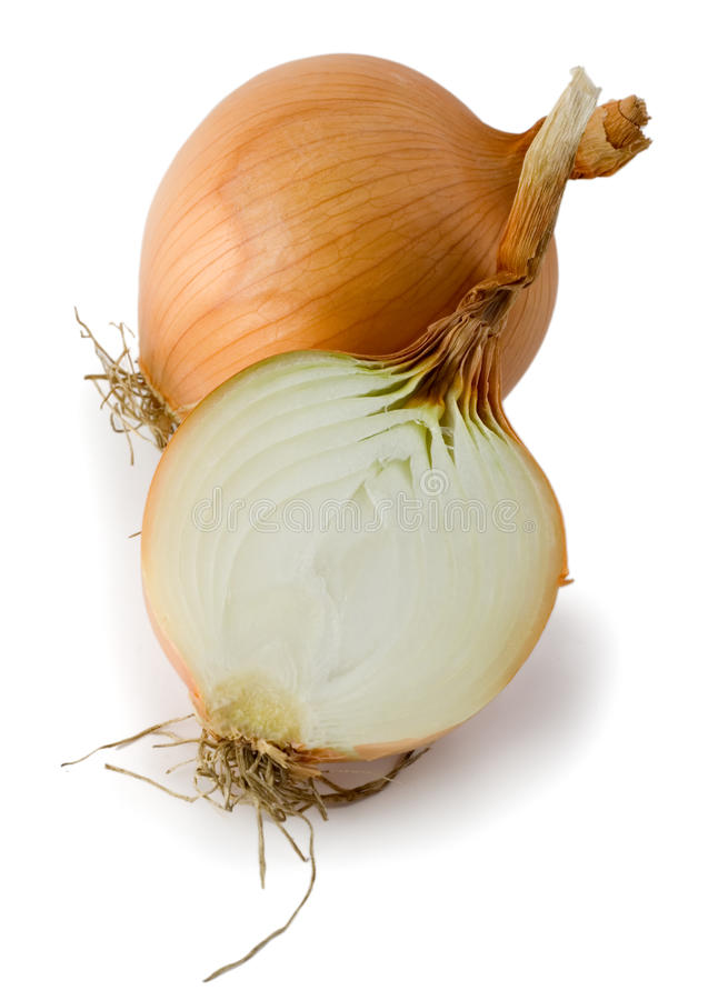Onion isolated. Onion close-up isolated on white background royalty free stock photos