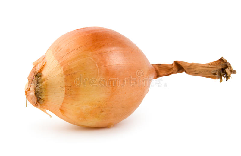 Download Onion isolated stock photo. Image of studio, food, white - 13522274
