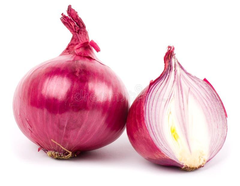 Onion isolated. On white background royalty free stock image