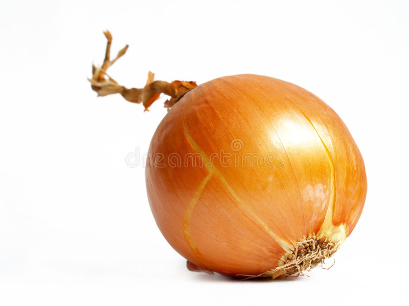 Onion isolated on white royalty free stock image