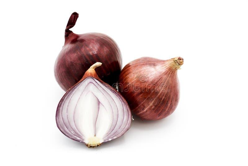onion isolated on white background royalty free stock image