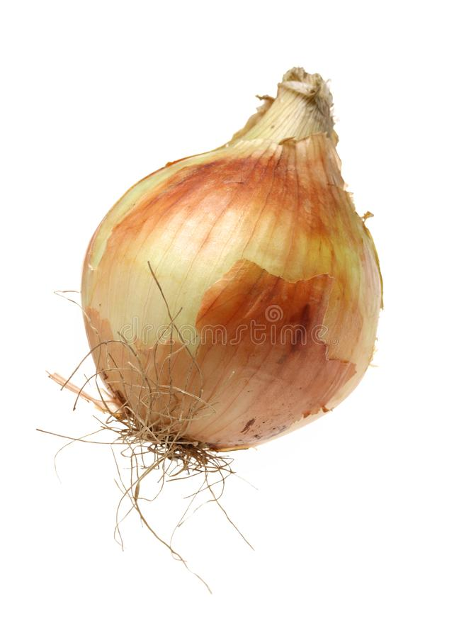 An Onion stock image