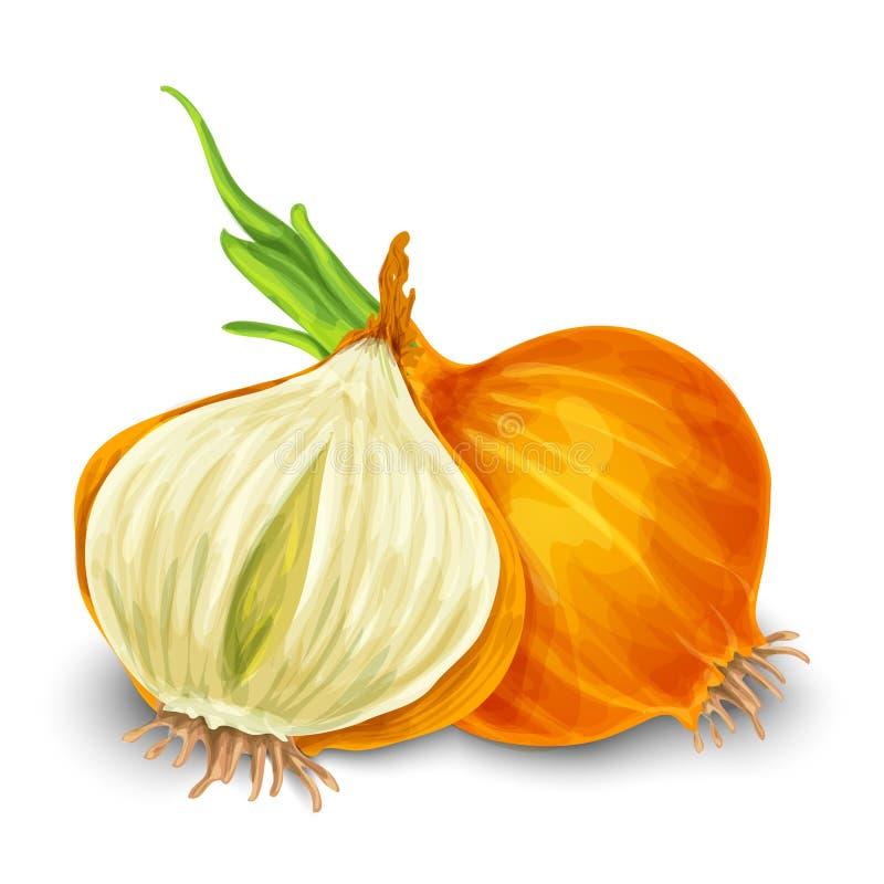 Onion isolated on white royalty free illustration
