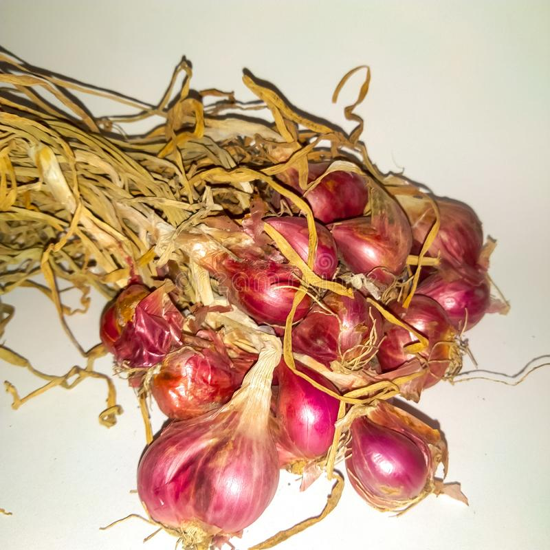 Onion with magenta color royalty free stock images