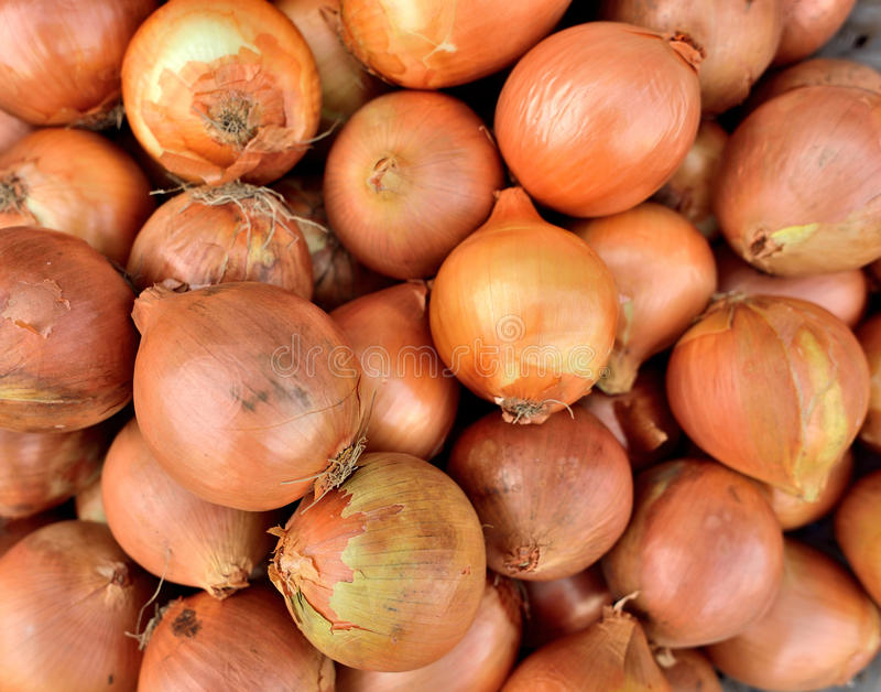 Download Onion stock photo. Image of organic, healthy, ingredient - 33786118
