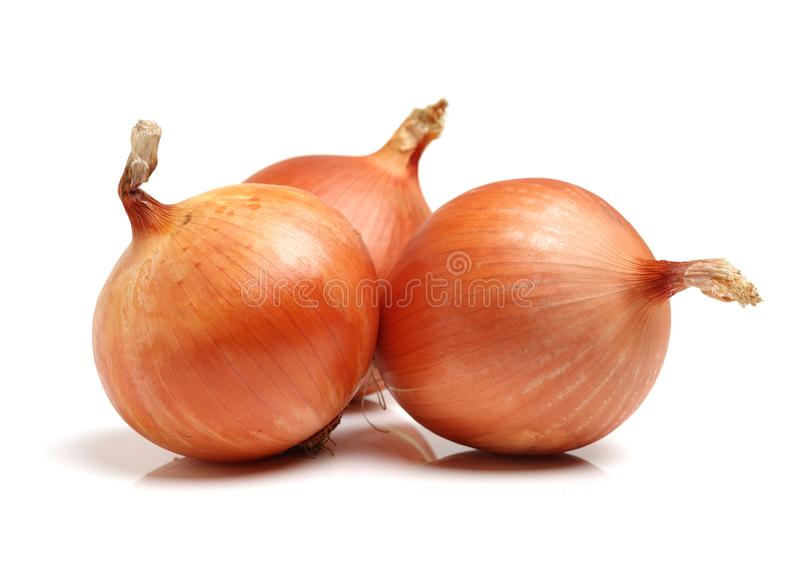 Onion royalty free stock photography