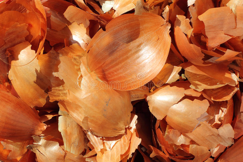 Onion peel. Close-up of onion peel. Onion peel is traditionally used for coloring eggs for Easter stock photography