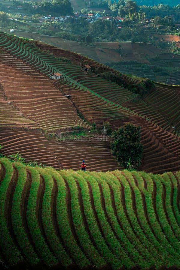Green Line Pattern Plantation terracing. Onion plantation in Argapura Majalengka, west java, indonesia stock images