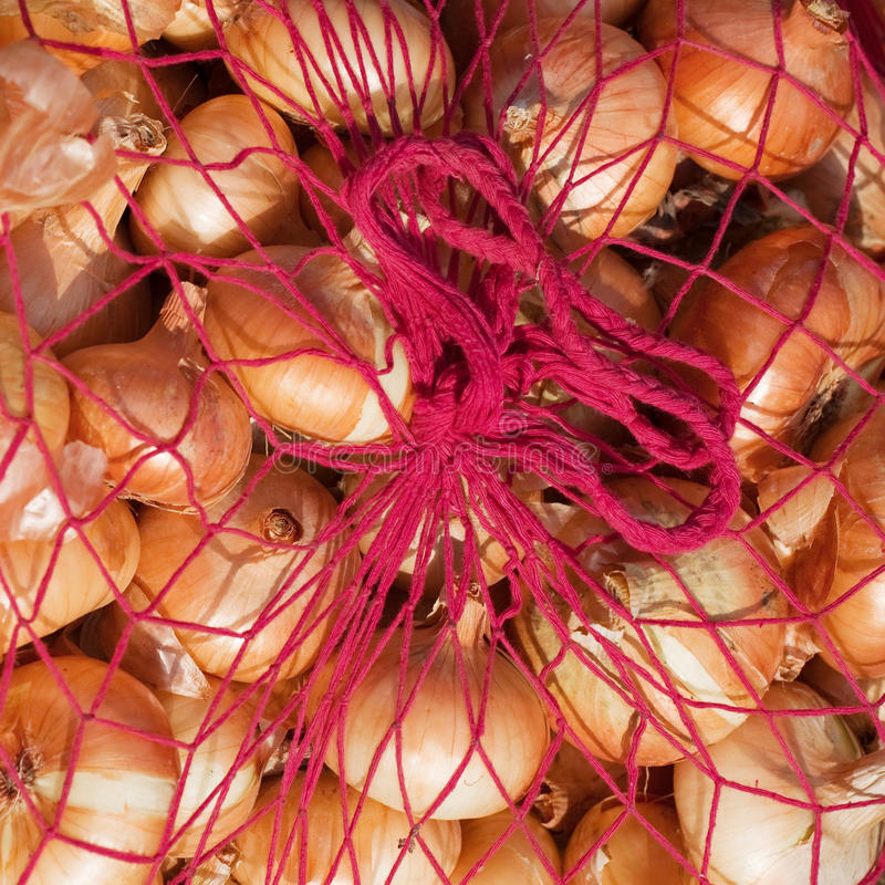 Onion in sack. Close up of harvested onion in sack royalty free stock photo